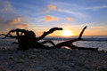 Driftwood on the ocean sunset background. Royalty Free Stock Photo