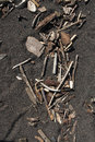 Driftwood on Sand Royalty Free Stock Photo