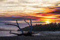 Driftwood at sunset, Victoria, Australia Royalty Free Stock Photo