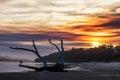 Driftwood at sunset, Victoria, Australia Royalty Free Stock Photo