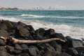 Driftwood on volcanic rocks at Gold Coast, Australia Royalty Free Stock Photo