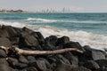 Driftwood on volcanic rocks at Gold Coast, Australia Royalty Free Stock Photo