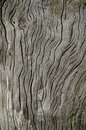 Driftwood with Weathered Grain Stock Photography