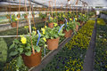 Drip irrigation (drop by drop) Stock Photos