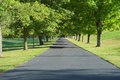 Driveway lined by trees a long is shown bright green and lawn suggesting affluence and a posh home Stock Photos