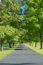 Driveway lined by trees a long is shown bright green and lawn suggesting affluence and a posh home Stock Photography