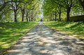 Driveway long straight lined with mature trees sprouting leaves in spring time Royalty Free Stock Photos