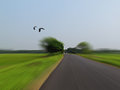 Driving fast country road birds flying along still focus road blurred out intentionally to illustrate speed Stock Image