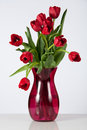 Drooping Red Tulips Royalty Free Stock Images
