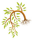Drooping sapling an illustration of a realistic Royalty Free Stock Images