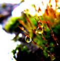Drop background 1 Stock Photo