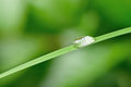 A drop of dew on a blade of grass Stock Photos