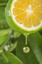 Drop lemon juice falling down Stock Photo