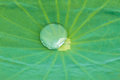Drop water on Lotus leaf Royalty Free Stock Photo