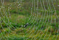 Droplets on cobweb a spiders Royalty Free Stock Photography