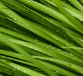 Droplets on grass Royalty Free Stock Photo
