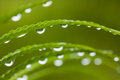 Droplets on green leafs Royalty Free Stock Photo