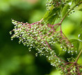 Droplets of Water on Plant after Rain Royalty Free Stock Photo