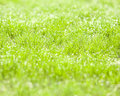 Drops of dew on green grass Stock Photos