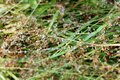 Kvapky z rosa na zelená tráva