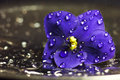 Drops on flower macro violet among small of water Stock Images