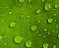 Drops on green leaf Stock Image