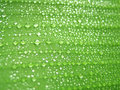Drops on green leaf Stock Photography