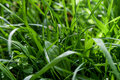 Drops on green sping grass Royalty Free Stock Image
