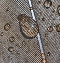 Drops of water on brown bird feather. Royalty Free Stock Photo