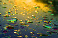 Drops of water caplin glass after rain at sunset Stock Photo