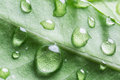 Drops of water over green leaf. Royalty Free Stock Photo