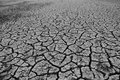 The drought Royalty Free Stock Photo