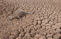 Drought in Australia Royalty Free Stock Photo