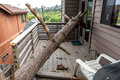 Drought causes dead pot pine tree to fall on house Royalty Free Stock Photo