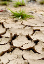 Drought concept image for climate change low angle image of lake bed following prolonged dry period cracked mud and struggling Royalty Free Stock Photos