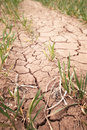 Drought cracked soil Stock Images