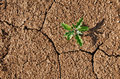 Drought cracked soil with plant growing through Stock Photography