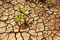 Drought, dry earth. Royalty Free Stock Photo