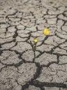 Drought hope nature summer yellow Stock Photos