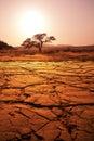 Drought land in namib desert namibia Stock Image