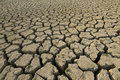 Drought and new life Stock Photos