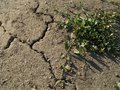 Drought parched soil in hot summer Royalty Free Stock Photo