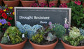 Drought resistant plants display of for sale Royalty Free Stock Photos