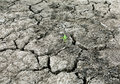 Drought Stricken Landscape Stock Image