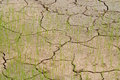 Drought young crops growing on cracked soil Royalty Free Stock Photos
