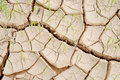 Drought young crops growing on cracked soil Stock Images