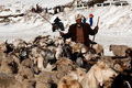 Drover with goats over snow india rohtang la june drower poses for a photo on the road to leh on june at the rohtang la pass Stock Images