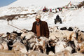 Drover with goats over snow india rohtang la june drower poses for a photo on the road to leh on june at the rohtang la pass Stock Photo