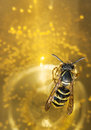 Drown wasp in a wine bee or Royalty Free Stock Images