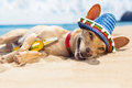 Drunk dog on the beach Royalty Free Stock Photo